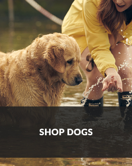Shop Dogs