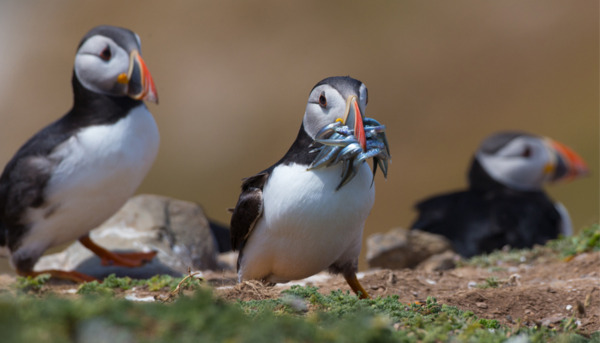 Celebrating 100 Years of the RSPB