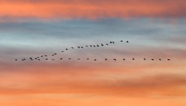 Migrating Birds: The V-Formation