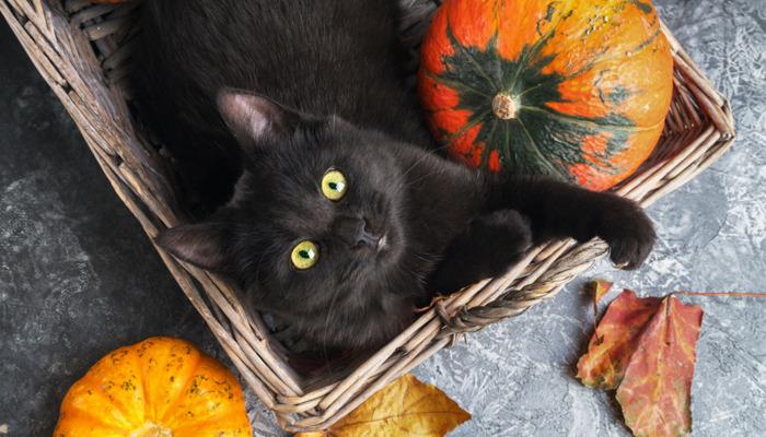 Black Cats: The Hocus Pocus
