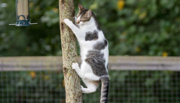 Garden Birds: Safer Feeding Tips