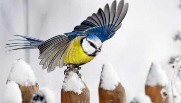 Birds: The Winter Garden