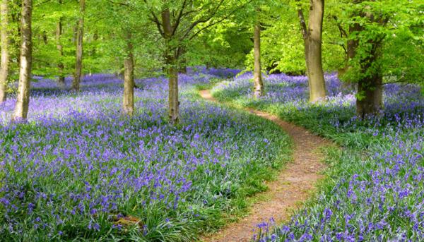 The UK's Hidden Woodland Treasures