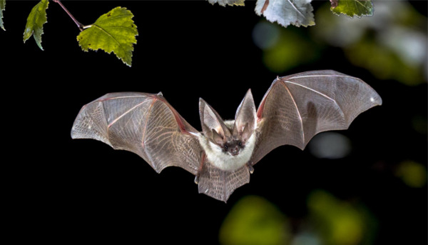 Where to find Bats in the UK