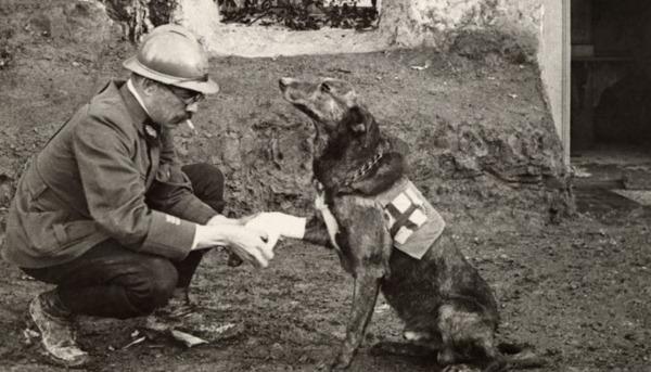 WW1: It's a Dog's Life