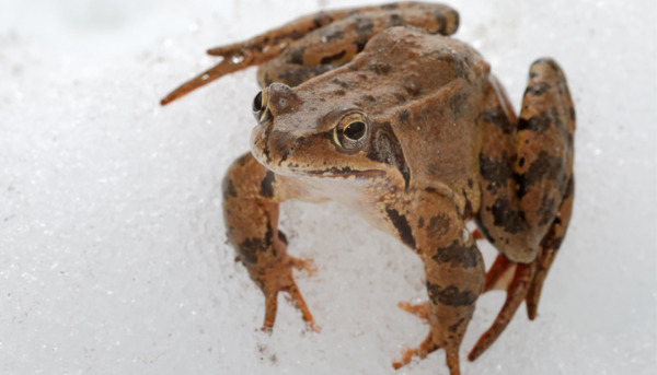 Winter Garden: A Treasure Trove of Wildlife