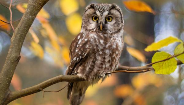 How Wise is an Owl?