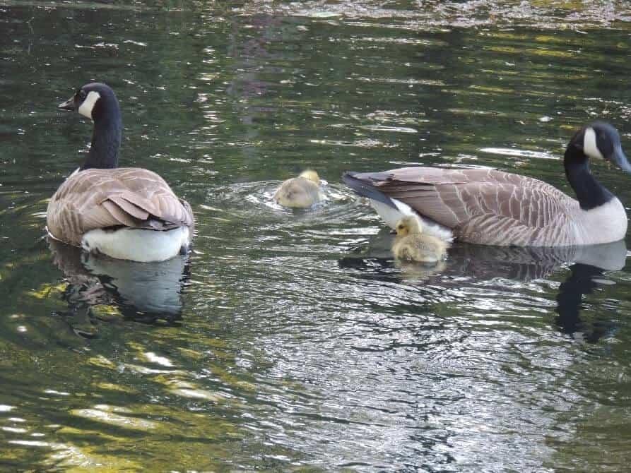 Griggs Pond Wildlife